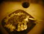 Le Vinoignon de Guewen